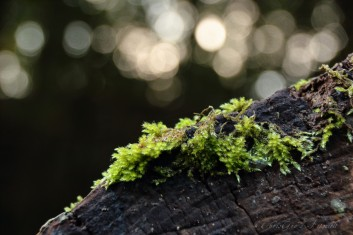 Moos auf gefälltem Baum...