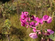 Pink again...