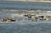 Seehunde genießen die Sonne
